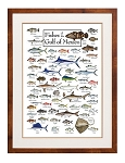 Fishes of the Gulf of Mexico Poster